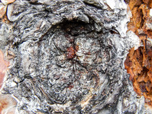 Close Up Of Tree Bark And Knothole