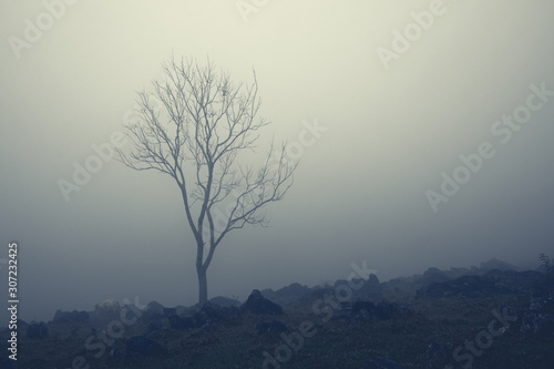 Lonely bare tree and white cow in milky fog on rocky hill