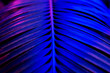 canvas print picture - Beautiful dark background of tropical leaf in trendy neon light.