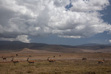 African Landscape With Gazelle...