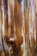 Close Up Of A Treek Trunk Dama...