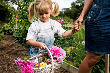 Girl Holding Basket With Pink Dahlias Walking Hand In Hand With A Woman Through A Garden.