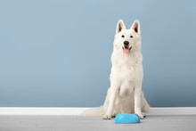 Cute Funny Dog And Bowl With Food Near Color Wall