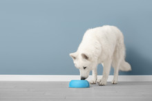 Cute Funny Dog Eating Food Fro...