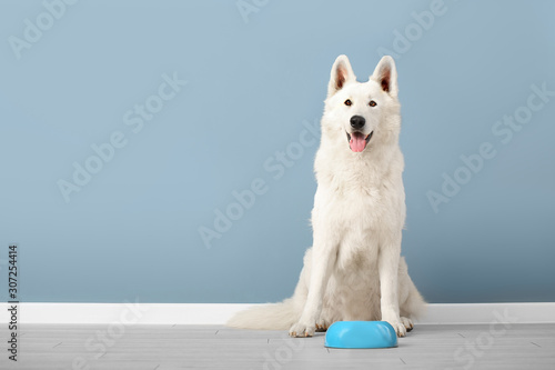 Obraz Cute funny dog and bowl with food near color wall - fototapety do salonu
