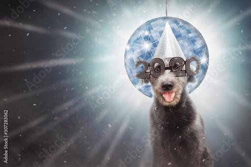 obraz dibond Funny New Year 2020 Dog
