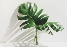 Monstera Leaves In Glass Jug W...