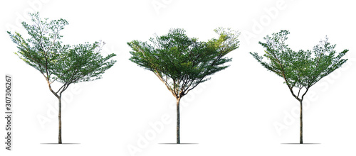 Ταπετσαρία τοιχογραφία  collection of trees isolated on white background
