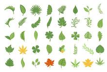 Leaf Vector Set Collection Gra...