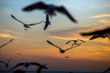 The blurred abstract background of the seagulls flying with the twilight light in the evening, and a multitude of birds on the branch while watching the evening.