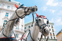 Traditional Horse Coach Fiaker...
