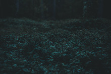 Dark And Mood Forest Plants