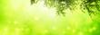 unterm birkenbaum, abstrakter hintergrund