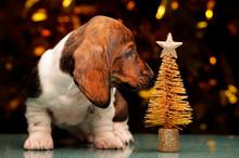 Puppy Portrait Miniature Gold ...