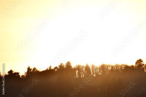 Photo  sunset in forest, photo as a background