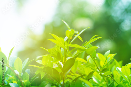 Fototapety, obrazy: Nature Tree Abstract Background Ecology Concept