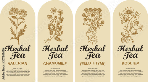 Set of four vector labels for various herbal tea decorated by hand-drawn herbs and calligraphic inscriptions with place for text in retro style. Valerian, Chamomile, Field thyme, Rosehip