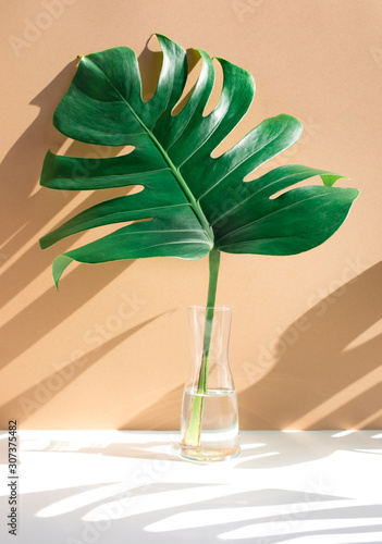 Monstera leaves in glass jug with sunlight and long shadow on wall Wall mural