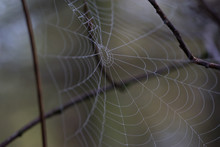 A Spiders Web Covered In Morni...
