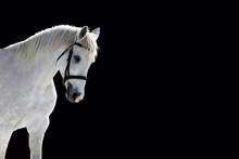 Beautiful White Horse Isolated...