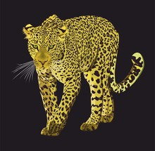 Walking Leopard Graphic Design Isolated On Black Background. Animal Hand Drawn Illustration. - Vector