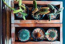 Small Cactus/cacti For Table T...