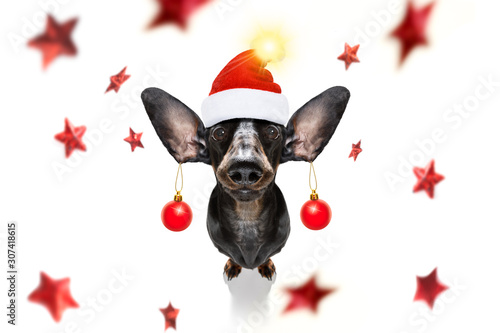 Foto op Canvas Crazy dog christmas santa claus dog and xmas balls or baubles hanging from ears