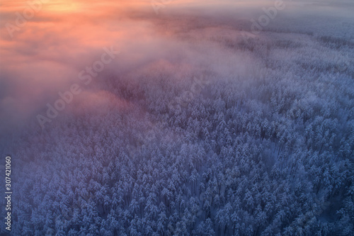 Winter forest from above Canvas-taulu