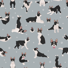 Boston Terrier Seamless Pattern. Dog Healthy Silhouette And Yoga Poses Background