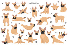 French Bulldog Clipart. Dog He...