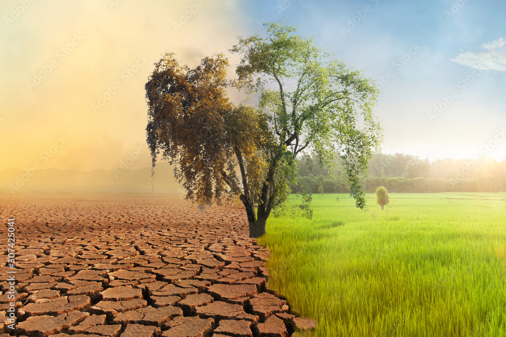 Fototapeta Climate change, A drying tree with air pollution and green grass with beautiful sunlight sky metaphor world nature disaster and global warming concept.