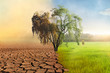 Leinwandbild Motiv Climate change, A drying tree with air pollution and green grass with beautiful sunlight sky metaphor world nature disaster and global warming concept.