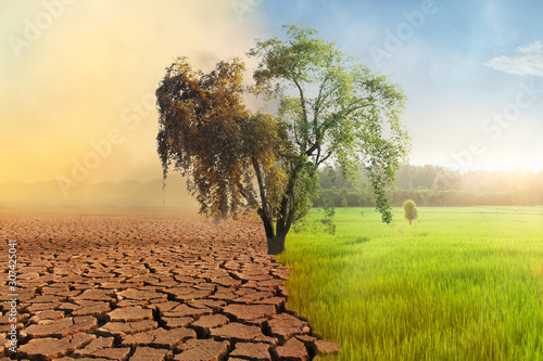 Fotografia, Obraz Climate change, A drying tree with air pollution and green grass with beautiful sunlight sky metaphor world nature disaster and global warming concept