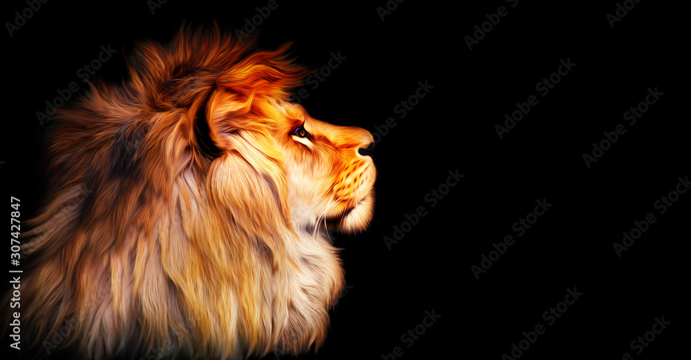 Fototapeta African lion profile portrait isolated on black background, spectacular dramatic king of animals, proud dreaming fantasy Panthera leo looking forward. Stylized photo banner with copy space for text.