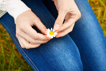 Chamomile Flower In Woman's Hand