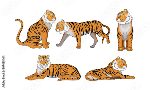 Collection of Tigers, Wild Animal in Various Poses Vector Illustration Canvas Print