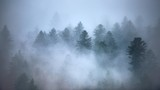 Breathtaking scenery of a beautiful tree forest enveloped in fog - great for a cool wallpaper
