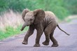 canvas print picture Cute baby elephant running along the road with a blurred background