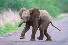 Cute Baby Elephant Running Alo...