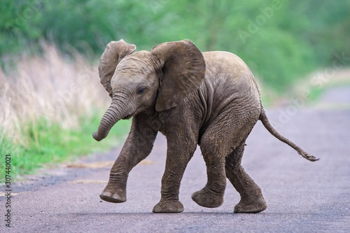 Cute baby elephant running along the road with a blurred background Canvas Print