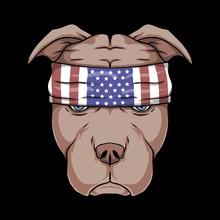 Pitbull Dog Head Vector Illustration