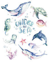 Set Of Sea Animals Poster. Blue Watercolor Ocean Fish, Turtle, Whale And Coral. Shell Aquarium Background. Nautical Wildlife Dolphin Marine Illustration, Jellyfish, Starfish