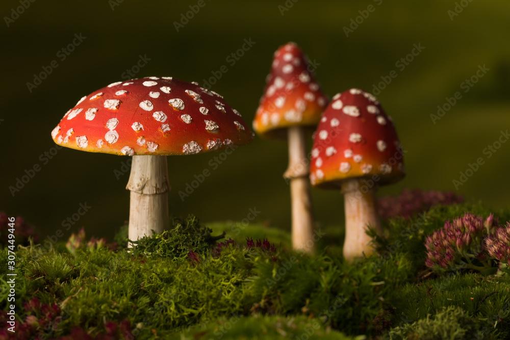 Fototapeta Three toadstools fairy background