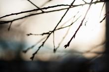 Up Close Dreamy Image Of Tree ...