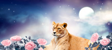 African Lioness And Moon Night In Roses Garden. Fantasy Wildlife Landscape Banner. Proud Dreaming  Lion In Magic Flowers Resting And Looking Forward. Spectacular Dramatic Starry Cloudy Sky And Stars.