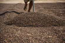 Worker Traces Coffee During Gr...