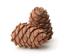 Two Ripe Pine Cones