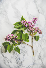 Lilac On Marble Background