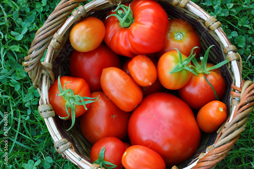 red tomatoes in a basket on the grass, top view. Fototapeta