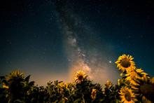 Gran Via Láctea  Y Girasoles